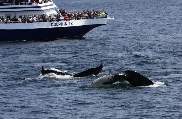 Whale Watch - Provincetown